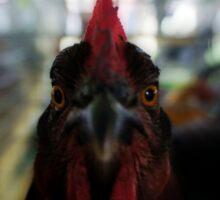 Chicken Close Up Sticker
