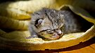 Newborn Kitten by Jessica Liatys