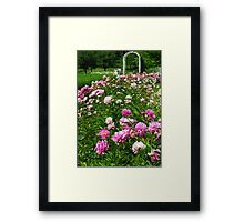 A Patch of Peonies  Framed Print