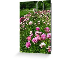 A Patch of Peonies  Greeting Card