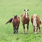 Draft Horse Trio  by lorilee