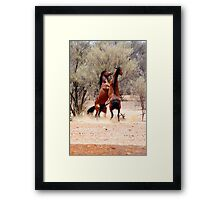 stallion fight Framed Print