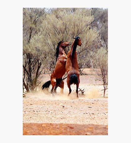 stallion fight Photographic Print