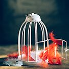 empty bird cage by Jessica  Lia