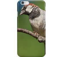 Male House Sparrow Perched in a Tree iPhone Case/Skin