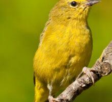 Female Yellow Warbler Sticker