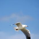 freedom by Jan Stead JEMproductions