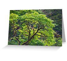 Oregon Vine Maple - Spring Leaves Greeting Card