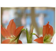 Lillies by the Siem Reap river Poster