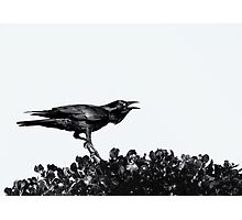 Raven Black Photographic Print