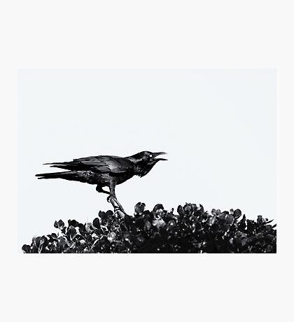Raven Black Photographic Print