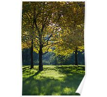 tree in the park in autumn Poster