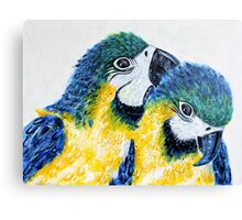 Two Macaw Parrots Canvas Print