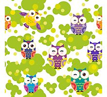 Colourful owls Photographic Print