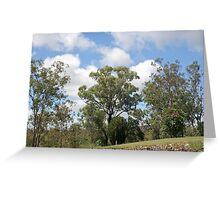 Trees at Lake Monduran 3 Greeting Card