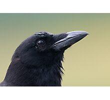 American Crow Photographic Print