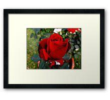 Red Scarlett Framed Print