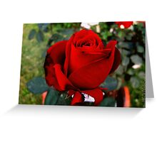 Red Scarlett Greeting Card