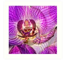Ethereal Orchid By Sharon Cummings Art Print