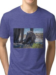Baby elephant sitting in mud beside mother Tri-blend T-Shirt