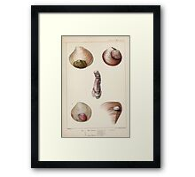 Proceedings of the Zoological Society of London 1848 - 1860 V5 Mollusca 015 Framed Print