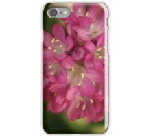 Pink Armeria Cluster iPhone Case/Skin