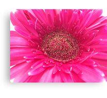 Hot Pink Gerbera Canvas Print