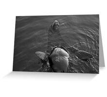 Sea Lion IV Greeting Card