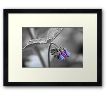 Colour of Flowers Framed Print