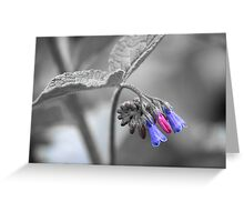 Colour of Flowers Greeting Card