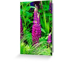 Purple Lupine Flower Greeting Card