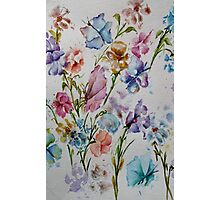 PAW-SCH - BUTTERFLIES AND FLOWERS  Photographic Print