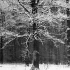 Black and White Forest Structure by denis-romanov