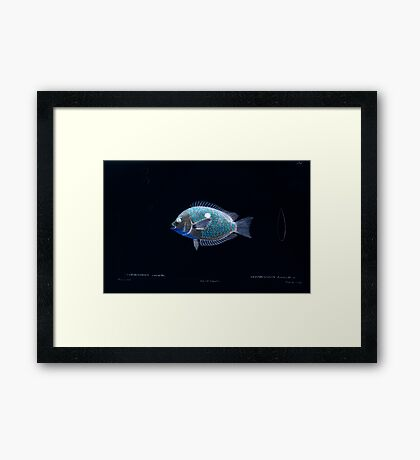 Natural History Fish Histoire naturelle des poissons Georges V1 V2 Cuvier 1849 123 Inverted Framed Print