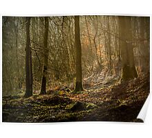 Autumn Forest At Jackdaw's Scar Poster