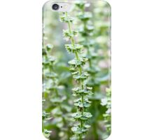 Basil iPhone Case/Skin