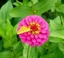 Retrofly by Kelsey Williams