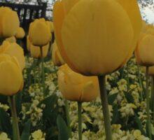 Yellow Tulips Sticker