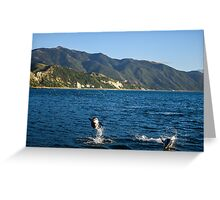 Dolphins say hi at Kaikoura, New Zealand Greeting Card