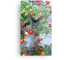 Butterfly on Marigolds Metal Print