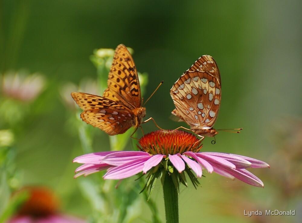 Fritillary Butterfly Duo by Lynda   McDonald