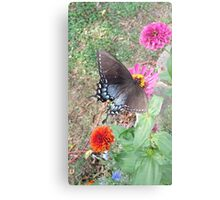 Butterfly on Zinnias Metal Print