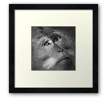 The Wise Monkey Framed Print