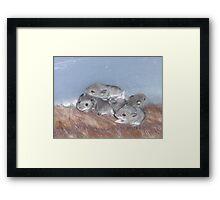 Baby Mice Framed Print
