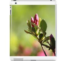 Lovely Spring Azalea Bud Bursting Forth iPad Case/Skin