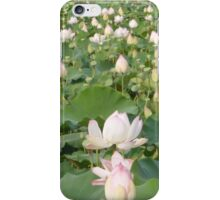 Lotus blossom field Siem Reap iPhone Case/Skin