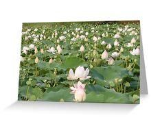 Lotus blossom field Siem Reap Greeting Card