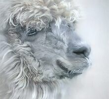 Portrait of a llama by Jan Pudney