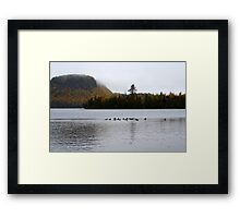 Ducks Have Webbed Feet Framed Print