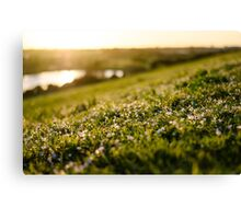Bokeh Bouquet  Canvas Print